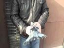О торцовых голубях