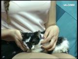 Сором'язливий Кузя із Дому перетримки для котів
