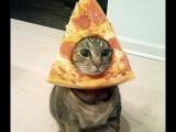 Девять жизней  Или все про котов  Топ самых смешных котов