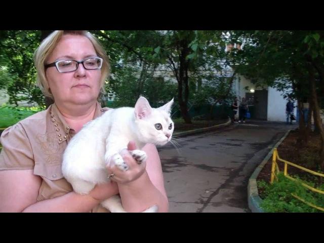 Прием в проф. клубах кошек PCA 21.08.2016г