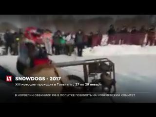 Showdogs - 2017