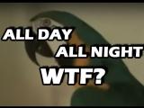 Попугай WTF  -