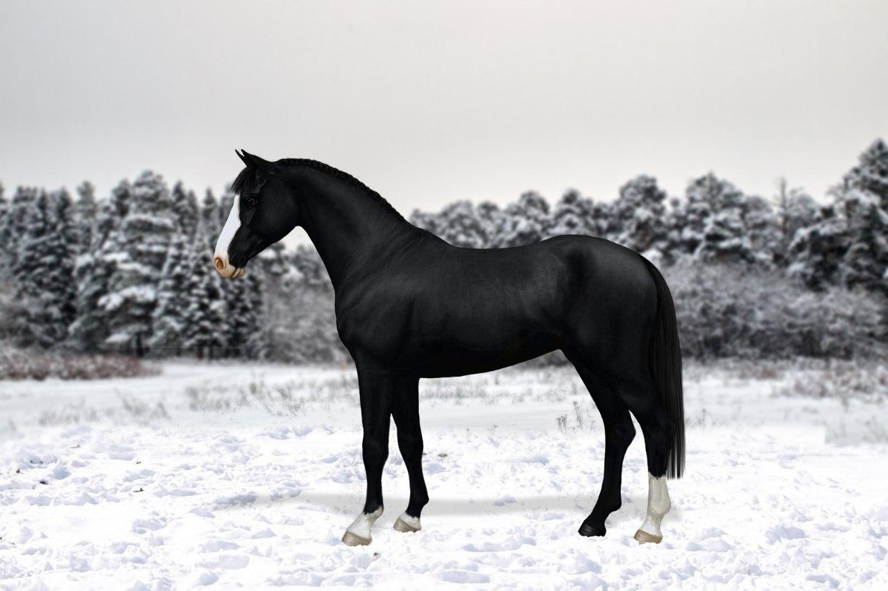 Регистрация лошадей в RHF 2 - Страница 4 AgVlz38Czeg