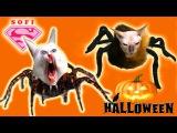 halloween diy !  Костюм на Хэлуин для кота