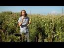 Popped Secret: The Mysterious Origin of Corn — HHMI BioInteractive Video