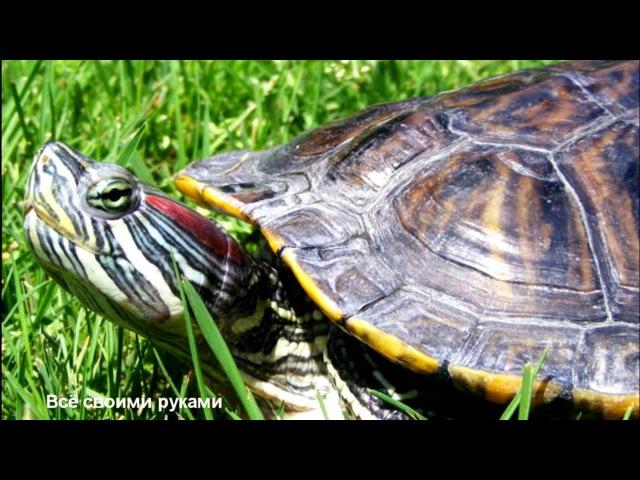 ТОП-10 ошибок при содержании красноухих черепах!TOP 10 mistakes in the content slider turtles!