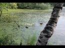 Утки плавают в Среднем пруду в районе Южное Бутово.