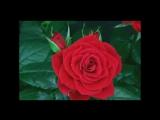 Красивые полевые цветы, маки ромашки, лаванда. The most incredible beautiful wil.mp4