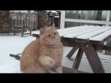 Коты и снег =))