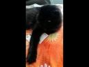 кошка-маруся