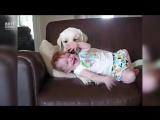 Собачка играется с малышом