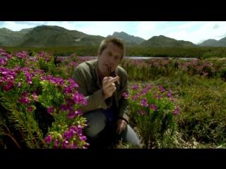 BBC Как вырастить планету - How to Grow a Planet (2012) 2.Притягательная история цветов