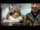 羊毛フェルト リアルな犬猫羊毛人形・きりのみりい・中京テレビ 12450