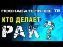 Кто делает рак Познавательное ТВ, Пламен Пасков