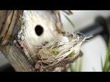 Easter birdhouse Пасхальный скворечник