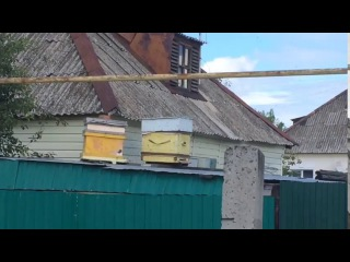 В Сызрани разводят пчёл прямо на улице 9 июля 2017