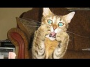 Смешные кошки и собаки Подборка приколов про животных