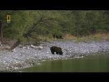 Дикая природа России , Сибирь _ Wild Russia, Siberia
