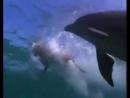 Дельфины-самые умные животные