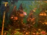 Мой аквариум 2