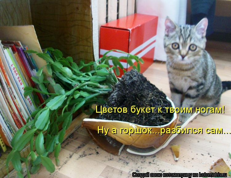 коты и цветы YhOUdQXY4cs