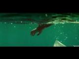 Sia - Bird Set Free ( OST The Shallows ) - 720p
