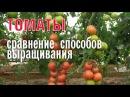 Томаты - сравнение способов выращивания