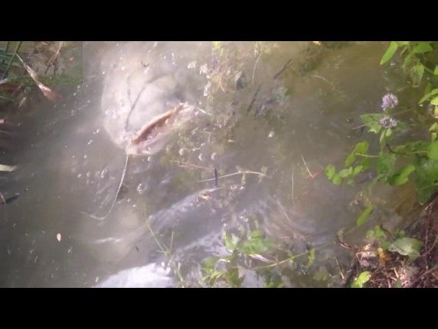 вот туда хочу на рыбалку!! Огромные сомы прикол на шарики новинка видео 2017