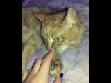 s.a.l.y.k.i.n.a_olchik video
