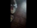 играем с кошкой
