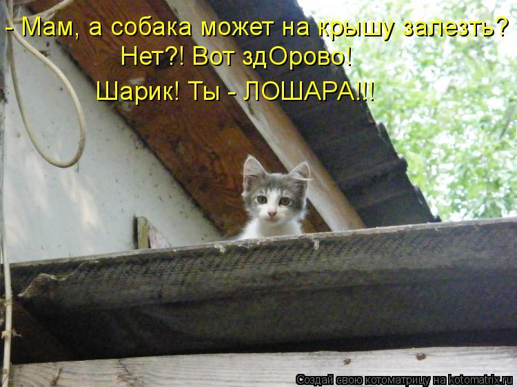 https://cs7057.vk.me/c637431/v637431426/243f8/a9LMQrSzS3g.jpg