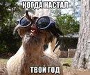 Юлия Халилова фото #15