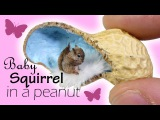 Mini Squirrel In A Peanut Tutorial DIY Miniature Pet