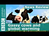 12. BBC News Review Gassy cows and global warming