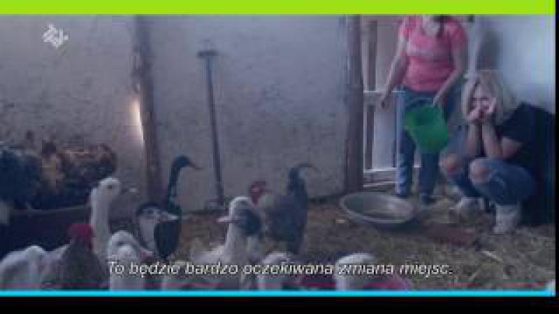 Damy i wieśniaczki.pl! Oglądaj nowy program w czwartek o 22:00 w TTV!