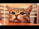 Кошки, которые считают себя другими животными