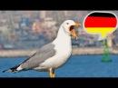 Учитесь понимать немецкий на слух . Часть 3.