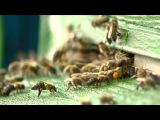Мёд из лаванды и шалфея