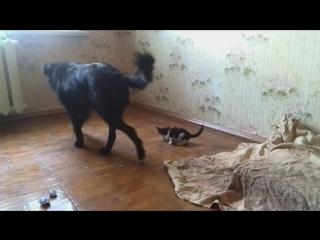 Чернослив и котята