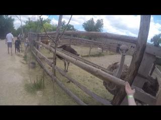 страусиная ферма с.4