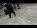 Собачьи бои 18 Ротвейлер vs Кане корсо
