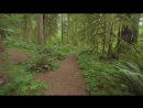 Walking in the Woods - 4K UHD Relaxation Video with Bird Singing and Forest Sounds - 20 minutes (2)