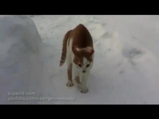 Страшный кот бродит по улицам в поисках жертвы!)))) Самый злой кот на свете! Ско