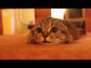 Кот обожает ужастики