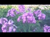Башкирские Песни клип