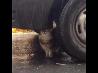 CAT Pom! Pom! Pom! Pom! Pom!