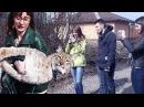 РЕАКЦИЯ ПРОХОЖИХ НА РЫСЬ Прогулка с большой кошкой Ханной THE REACTION OF PASSERS BY TO A LYNX