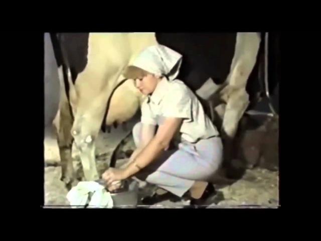 Правильная техника доения коровы