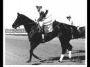 Резвая - легендарная лошадь Америки (последние минуты жизни...)