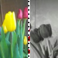 Надежда Щагвина
